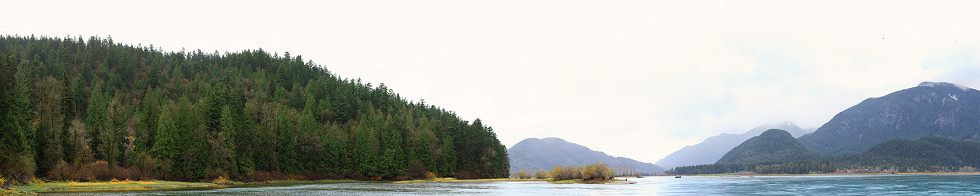 Harrison Mills Eagle Migration Gigapixel Photography
